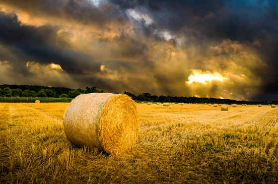 Make hay while the sun is shining